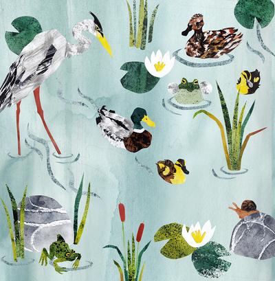 pond-heron-frogs-ducks-jpg