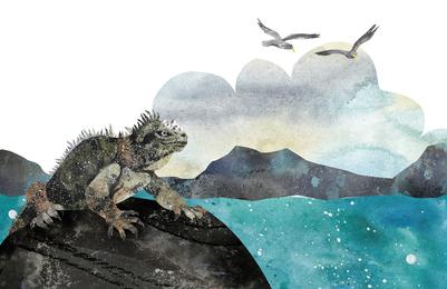 iguana-lizard-sea-gulls-jpg-1