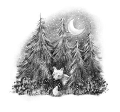 forrest-fox-jpg-jpg