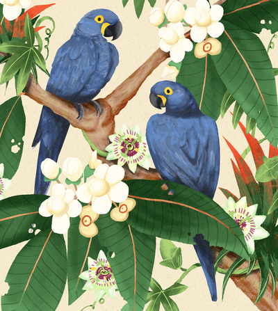 macaw-jpg-1