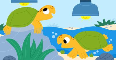 turtles-jpg-2