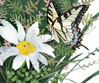 garden-chamomile-butterfly-flowers-plants-nature-jpg