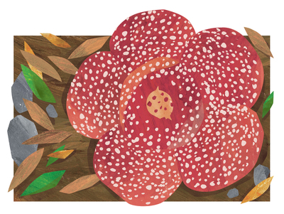 bunga-bangkai