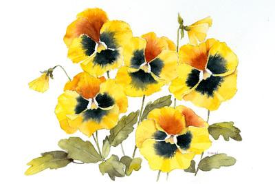 pansies-colour-jpg