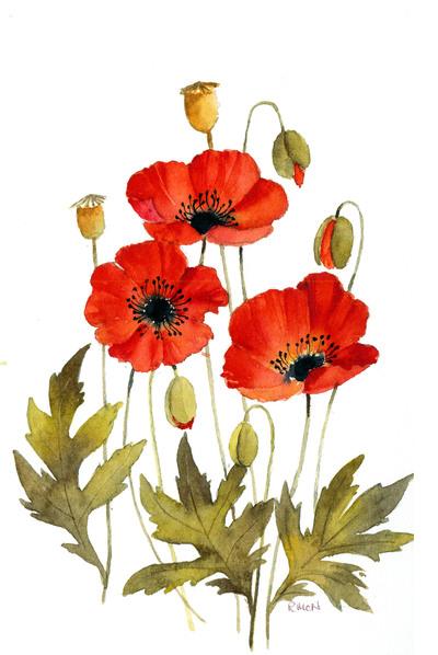 poppies-colour-jpg