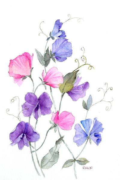 sweet-peas-colour-jpg