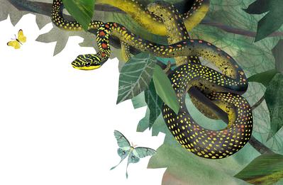 snake-tropics-animals-nature-jpg
