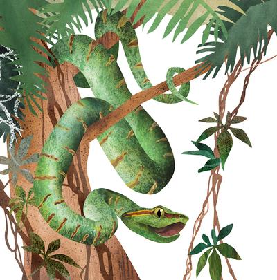 tropics-snake-nature-jungle-animals-jpg