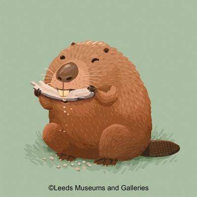 beaver-jpg