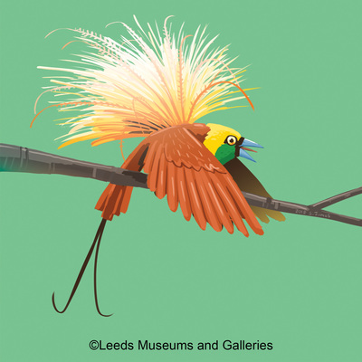 bird-of-paradise-jpg-1