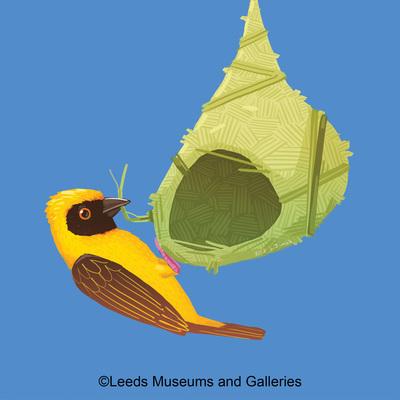 weaver-bird-jpg