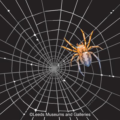 spider-jpg-3