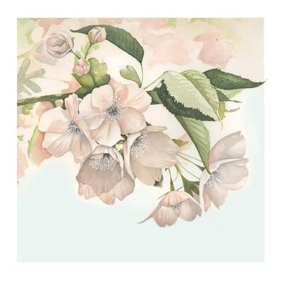 blossom-fiona-osbaldstone-jpg