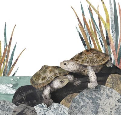 turtle-nature-animals