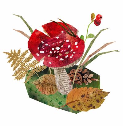mushroom-nature-forest-jpg