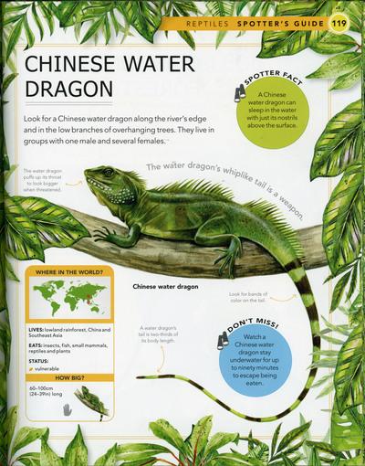 chinese-water-dragon-book-sample-fiona-osbaldstone-jpg