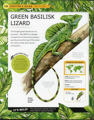green-basilisk-book-sample-fiona-osbaldstone-jpg