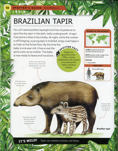 brazilian-taper-book-sample-fiona-osbaldstone-jpg