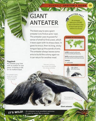 giant-anteater-book-sample-fiona-osbaldstone-jpg