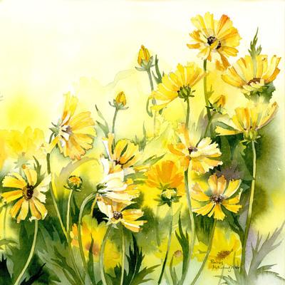 sunshine-daisies-sq-jpg