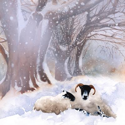 animals-snow-xmas-sheep-jpg