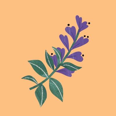 purple-flower