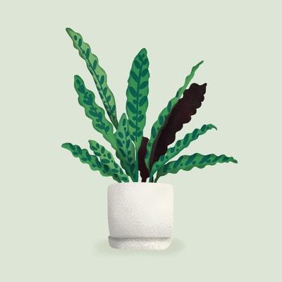 houseplant-jpg